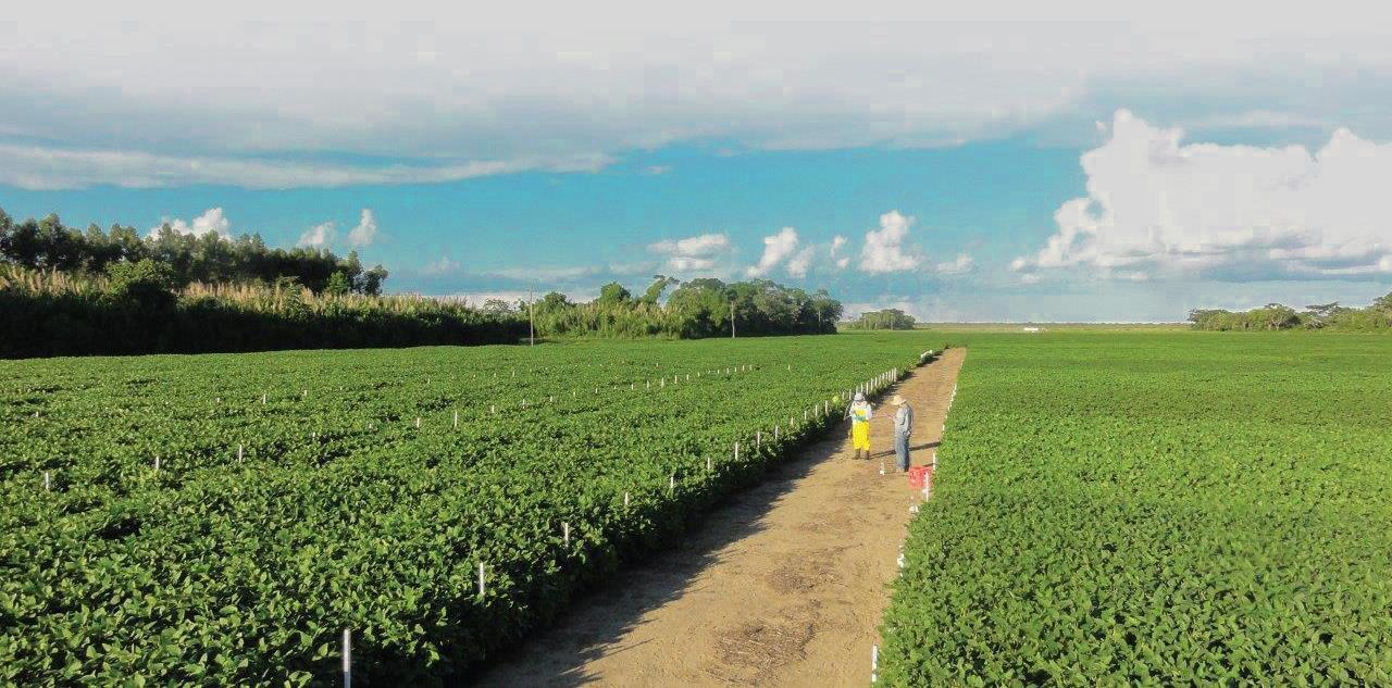 FUNDACRUZ Ha logrado a través de cada uno de sus Programas de Investigación, resultados relevantes, que han contribuido a brindar al agricultor un servicio de alta calidad