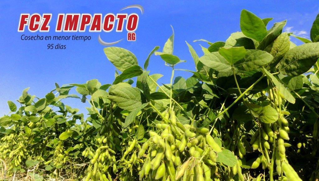 Variedad de soya de ciclo súper precoz, productivo en diferentes tipos de suelo en verano, IDEAL PARA LA ZONA ESTE, tiene buena tolerancia a Mancha anillada y Phythopthora.